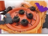 araignees-donuts-1